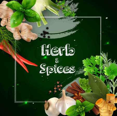 condiments: Spices and herbs on the green background