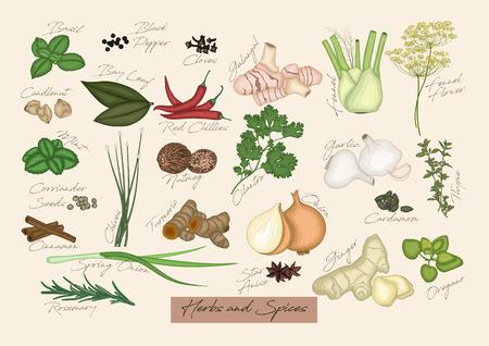 Vector illustratie van het verzamelen van kruiden en specerijen