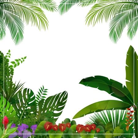 Ilustración de vector de selva tropical sobre fondo blanco