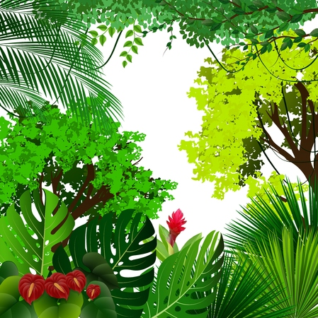 Vector illustration of Tropical jungle with palm trees and leaves on white background