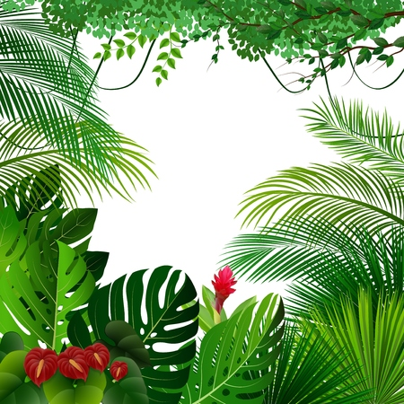 Vector illustration of Tropical jungle