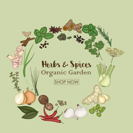 Vector illustration of Spices and herbs for shop of organic garden