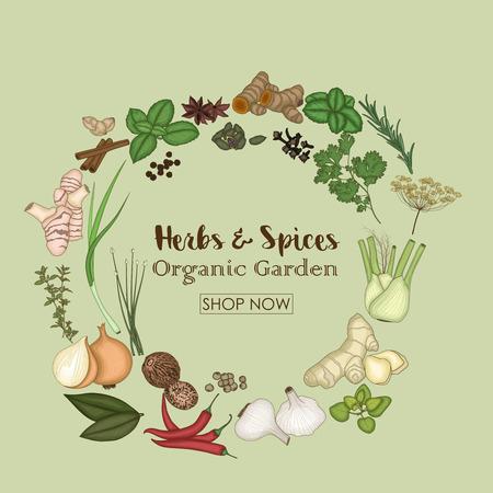 Vektor-Illustration von Gewürzen und Kräutern für den Shop des Bio-Gartens