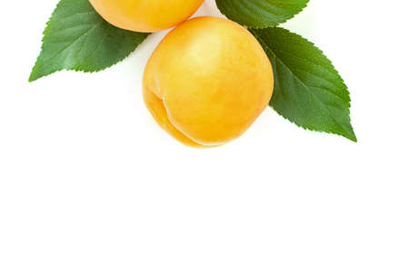 ripe juicy yellow apricots with leaves on a white table on a white background