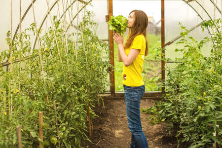 forcing bed: the girl in the greenhouse where grow tomatoes