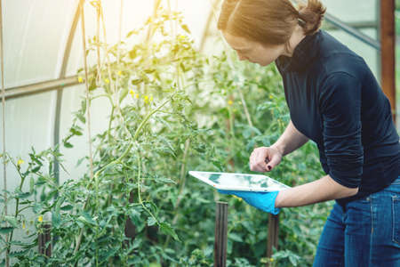 Woman specialist agronomist holding a tablet. Concept of environmentally friendly production on farms Standard-Bild