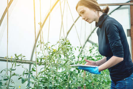 Woman specialist agronomist holding a tablet. Concept of environmentally friendly production on farms Stock fotó