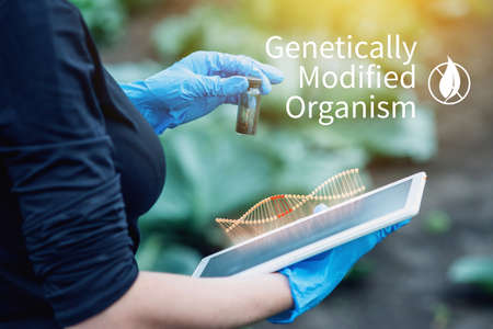 Scientist genetic engineer with a tablet testing the plant for the presence of genetic modification. Organisms and products polluted with GMOs Stock Photo