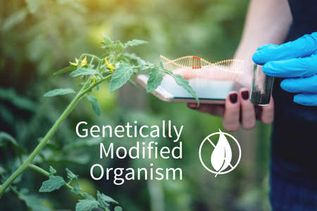 Scientist genetic engineer with a tablet testing the plant for the presence of genetic modification. Organisms and products polluted with GMOs 版權商用圖片