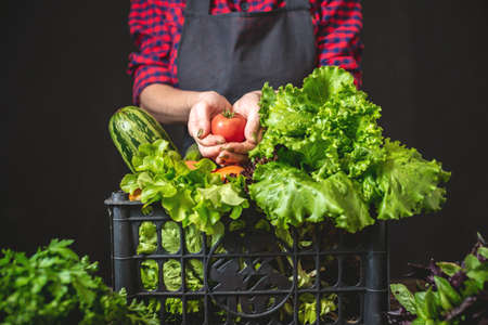 A cute woman farmer is holding a box with fresh vegetables and green salad on a dark background. Organic raw products grown on the farm. Banco de Imagens