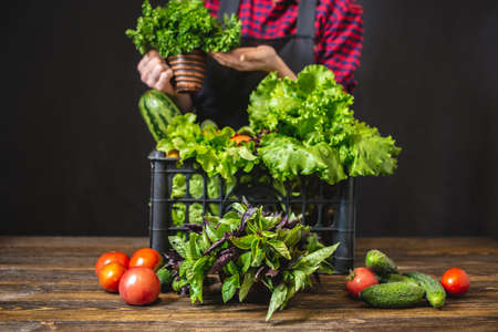 A young woman farmer is holding a box with fresh vegetables and green salad on a dark background. Organic raw products grown on the farm.