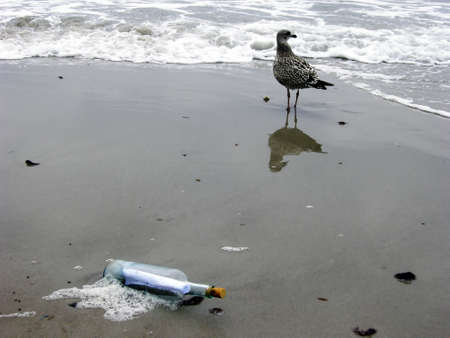 Message in the Bottle with gull photo