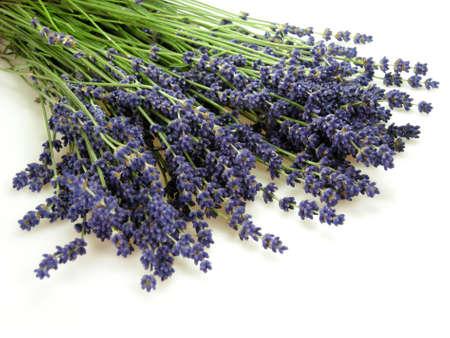 plantas medicinales: Lavanda