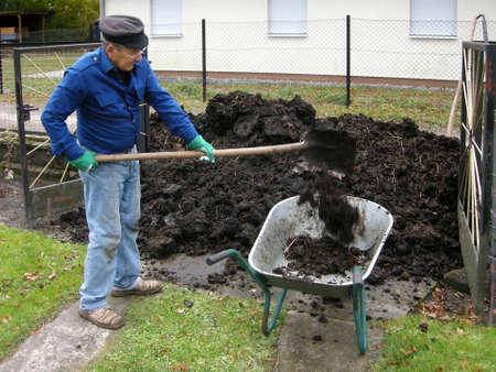Shoveling manure photo
