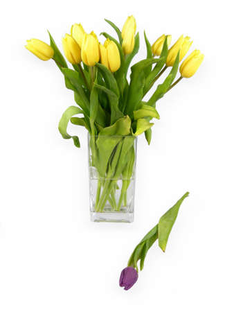 flowers of the tulip plant  Stock Photo - 12448154