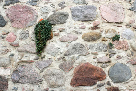Wall with ivy photo