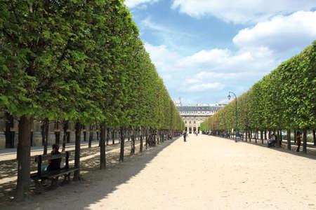 urban idyll: Tree Alley near Palais Royal