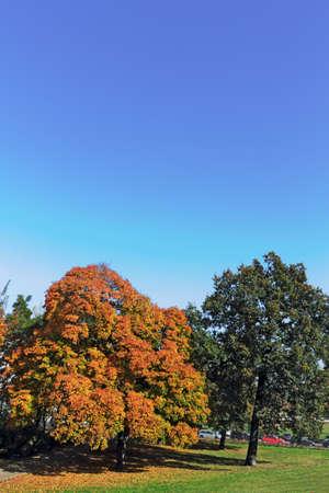 prenzlauerberg: autumn trees Stock Photo