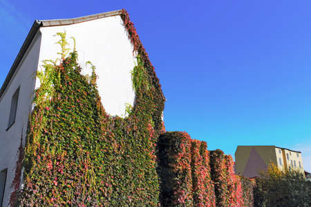 greening: house greening Stock Photo