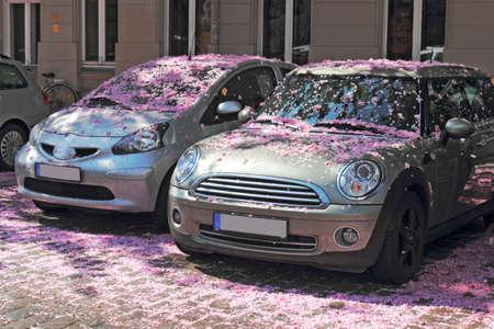 prenzlauerberg: Cherry Blossom time