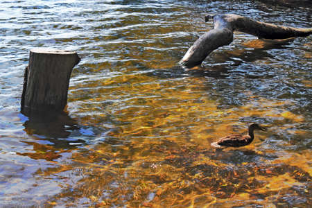 idyll: Lake Idyll Stock Photo