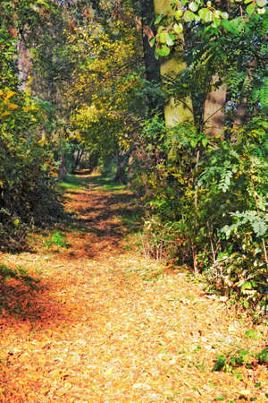 clearing the path: Bosque en oto�o