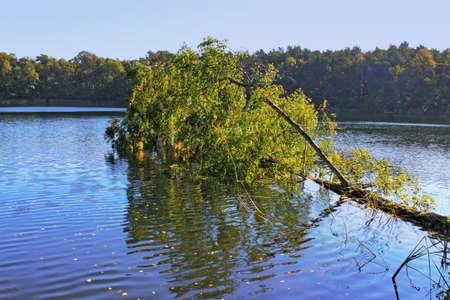overturned: Overturned tree