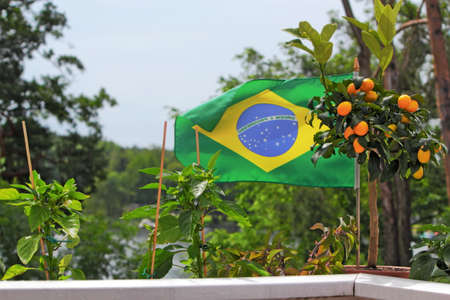 stay beautiful: Brazil flag and oranges