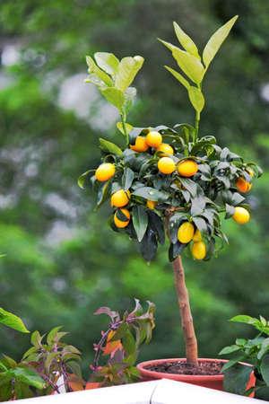 stay beautiful: Orange tree