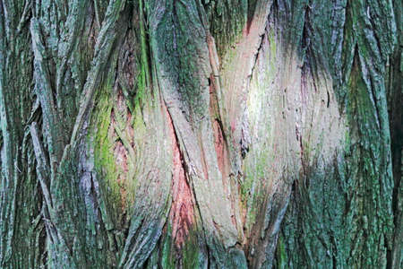 reflex: Light reflex on tree bark