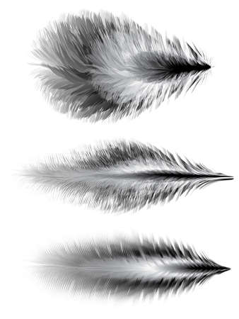 downy: Set of different feathers of birds. Illustration