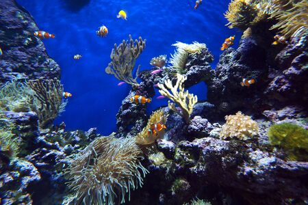 cartoon fishes in coral reef