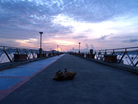 lie down: dog happy lie down on the bridge through the sea