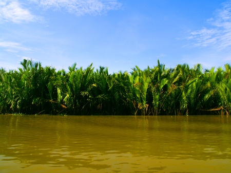 Tropical forest on the river