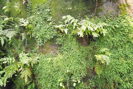 mosses: mosses on the wall