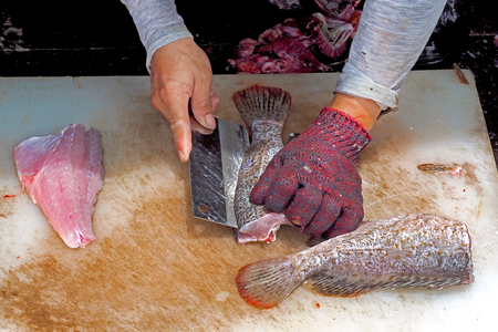 man wearing glove to cutting, fillet raw grooper and bass fish