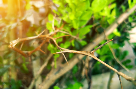 tree branch sharp spike on green environment with sun light Stock Photo