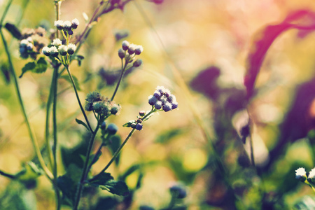 grass flower with bokeh blurred in orange sun light vintage style Foto de archivo
