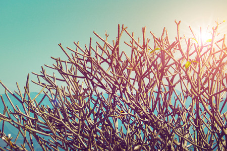tree branches without leaves on blue sky with sun light in vintage photography style effect Stock fotó