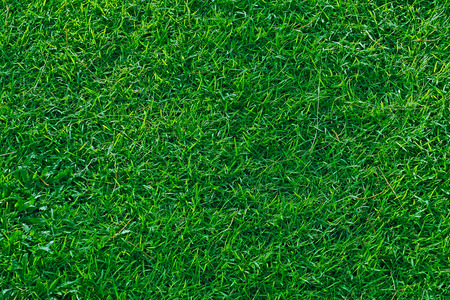 small grass texture background