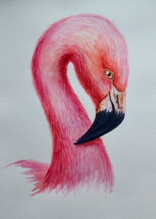 watercolor flamingo pink hand painted illustration bird profile portrait art print.