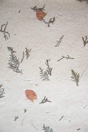 Old paper background texture with leaves and thuja Zdjęcie Seryjne