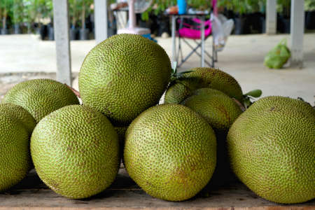 A stack of jackfruit in thailand. also known as jack tree, fenne, jakfruit, or sometimes simply jack or jak, is a species of tree in the fig, mulberry, and breadfruit family (Moraceae) native to southwest India.