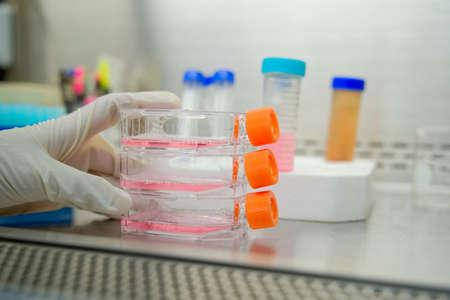 La investigadora trabaja con matraz de cultivo celular para células monocapas en el medio de cultivo en cabina de bioseguridad.