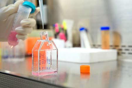 La investigadora cambia un nuevo medio de cultivo por medio de cultivo en el matraz para mantener la línea celular en la investigación de fármacos o productos químicos en la sala de laboratorio.