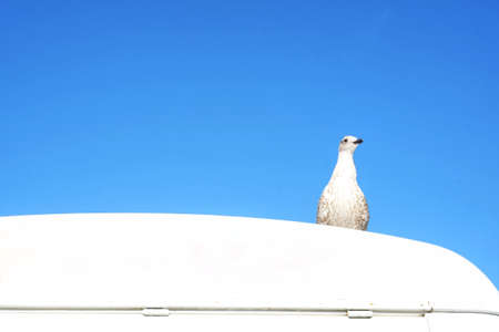A bird standing on the white van car with the blue sky in the background. Abstract freedom and independent.