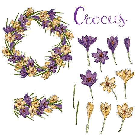 Vector isolated crocus on white. Frame and flover brush