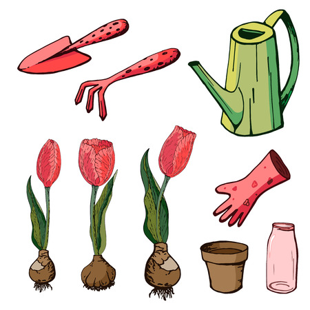 Vector floral illustration with tulips. Isolated elements of coral tulips on a white background. Various elements for spring season floral design. Gardening tools for planting