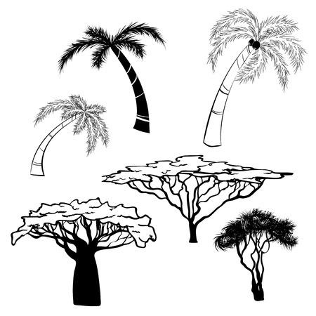 Silhouette von afrikanischen Bäumen schwarz auf weißem Hintergrund, Vektorillustration