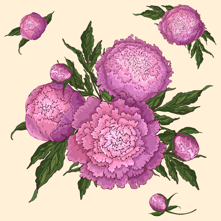 Vector peonies. Set of isolated pink-lilac flowers. Bouquets of flowers on a beige background. Template for floral decoration, fabric design, packaging or clothing.